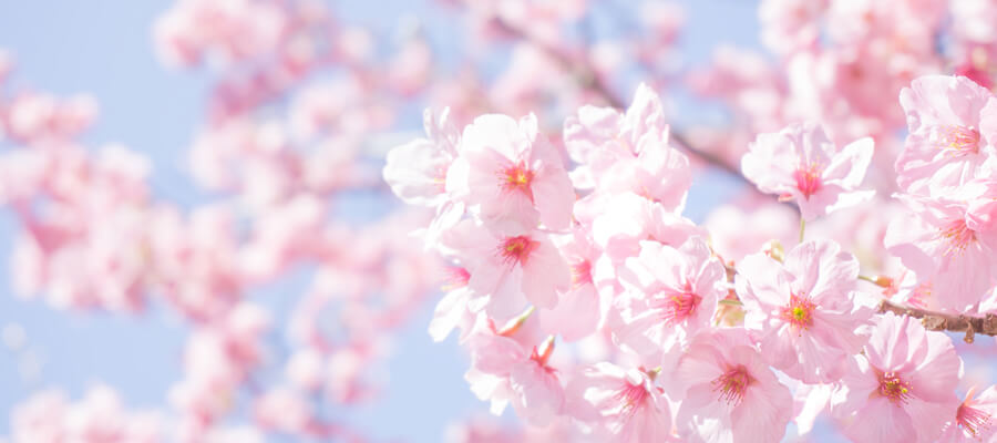 春におススメの柄3選