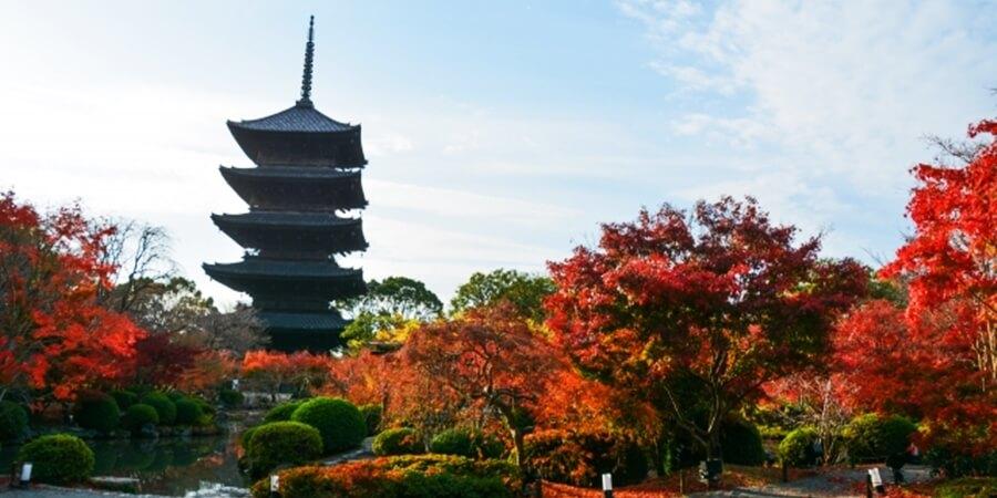 京都11月の紅葉