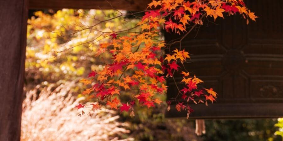 京都11月のライトアップ永観堂