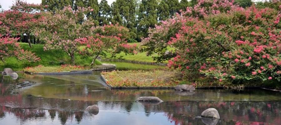 梅小路公園は家族連れにおすすめの梅見スポット