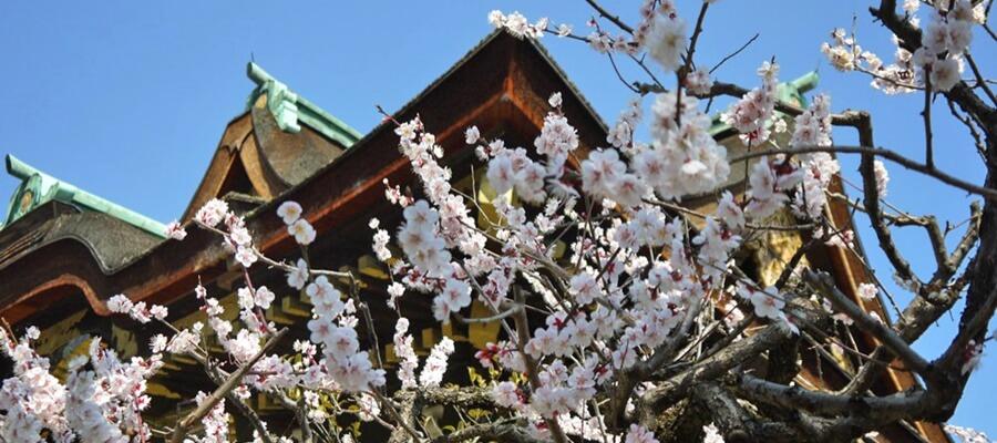 北野天満宮は京都最大の梅見スポット