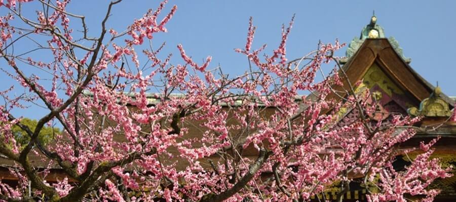 京都の梅のスポット3選
